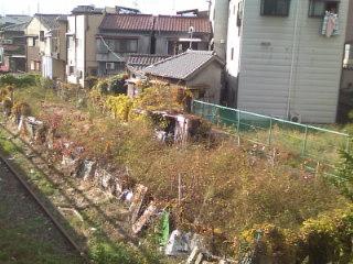 我が家の前の空き地。なぜか使ってない線路が走ってます(笑)。町の中ですがのどかです。