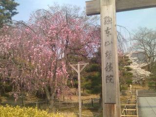 今日は京都でお仕事です。始まる前に智積院さんを参拝。長谷川東伯の国宝の障壁画も見ました。きれい〜。