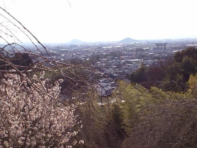 展望台より大和平野を臨む。天の香具山も見えますね。しばし古代に思いを馳せる。。咲いてるのは山桜かな?